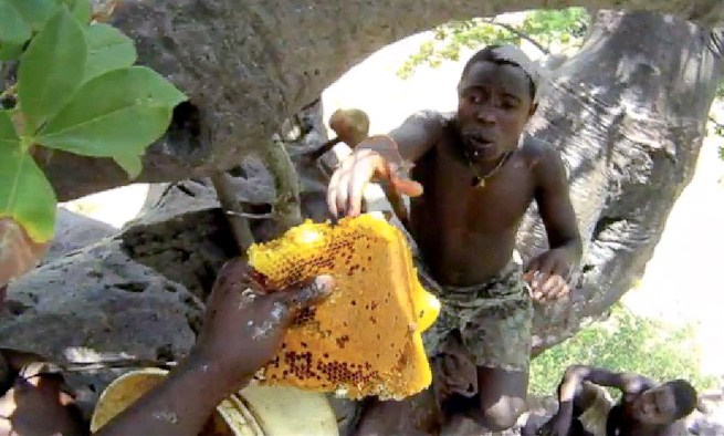 hunter gatherer collectin honey